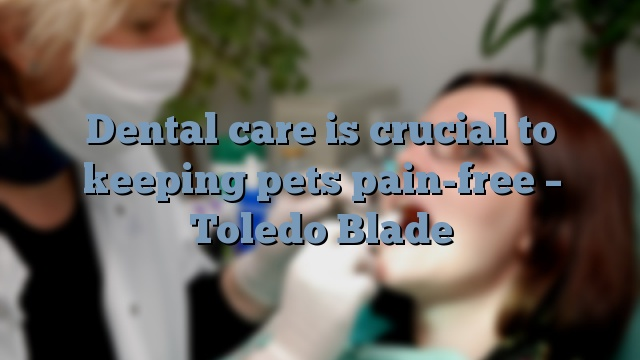 Dental care is crucial to keeping pets pain-free – Toledo Blade